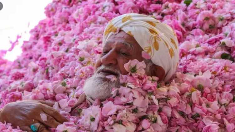 A farmer drowns himself in roses for a photo session in Taif
